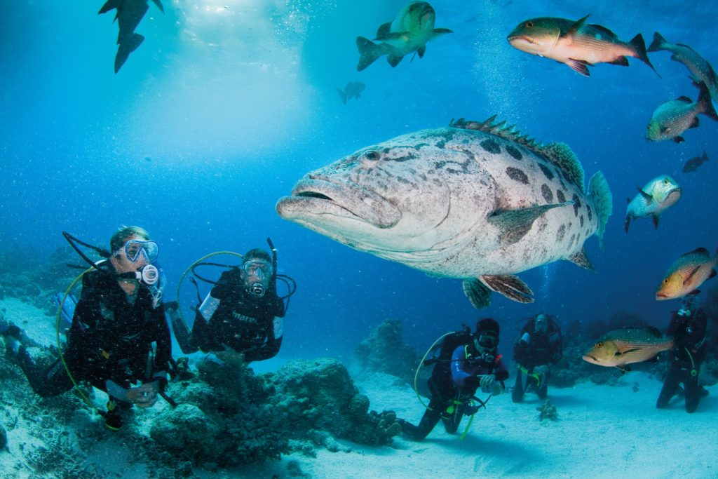 YOTSPACE superyacht voyages - Great Barrier Reef
