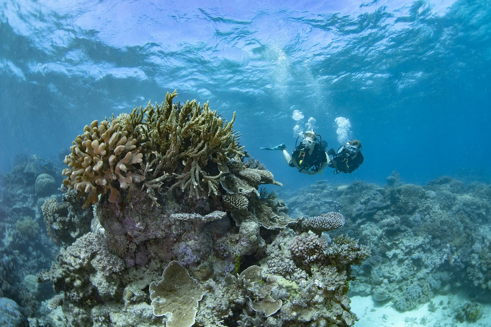 YOTSPACE superyacht voyages - Dive the Great Barrier Reef