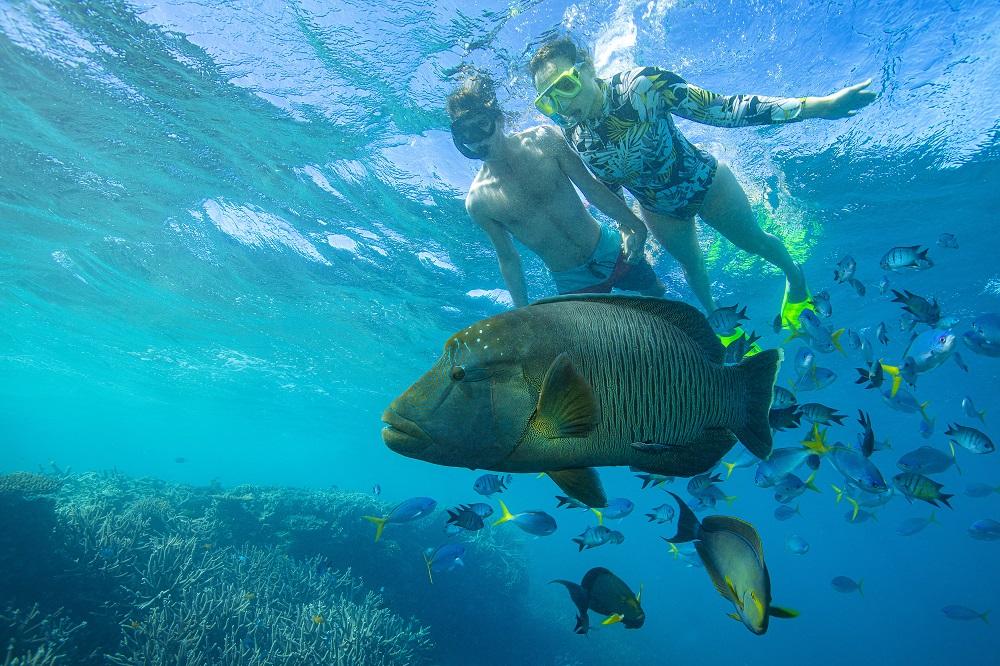 YOTSPACE superyacht voyages Great Barrier Reef - Snorkel with Marori Wrasse