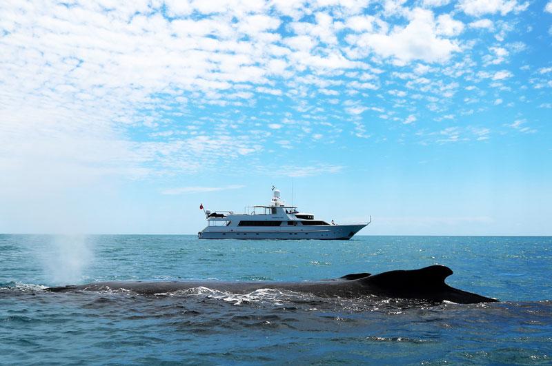 YOTSPACE superyacht voyages - Great Barrier Reef - Phoenix One